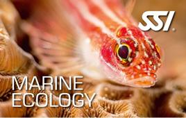Cours d'Écologie Marine en ligne