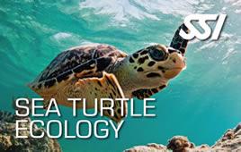 Ecología de Tortugas
