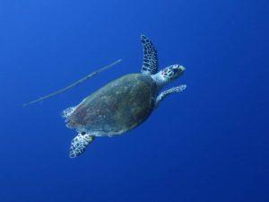 curso-ecologia-tortugas-oline