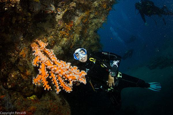 Curso Identificación de Corales Online