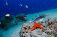 curso-open-water-diver-lanzarote-ssi-9