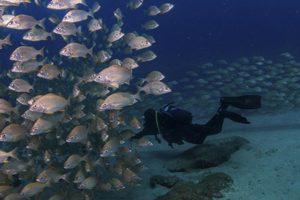 Curso Open Water Diver Lanzarote
